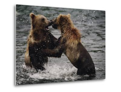 Two Grizzlies, up on Their Hind Legs, Fight in the Water-Joel Sartore-Metal Print