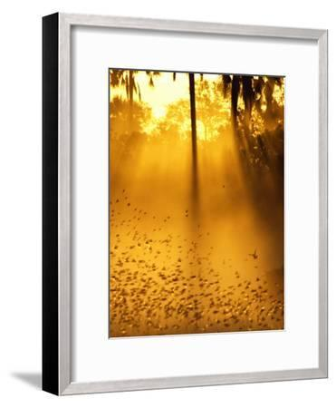 Birds Flying up into Sunlight Streaming Through the Jungle Foliage-Beverly Joubert-Framed Photographic Print