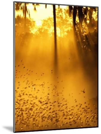 Birds Flying up into Sunlight Streaming Through the Jungle Foliage-Beverly Joubert-Mounted Photographic Print