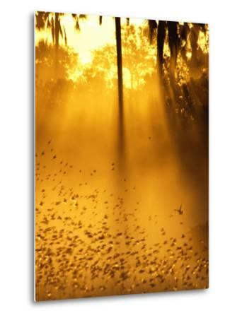 Birds Flying up into Sunlight Streaming Through the Jungle Foliage-Beverly Joubert-Metal Print