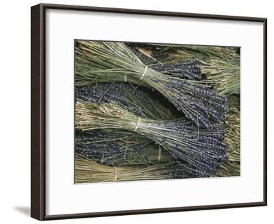 Sprigs of Lavender, Provence Region, France-Nicole Duplaix-Framed Photographic Print