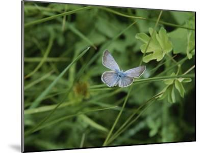 Close View of a Butterfly in Onion Valley-Marc Moritsch-Mounted Photographic Print