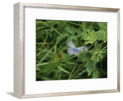 Close View of a Butterfly in Onion Valley-Marc Moritsch-Framed Photographic Print