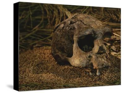 Close View of the Fossilized Skull of a Homo Erectus Found in Java-Kenneth Garrett-Stretched Canvas Print