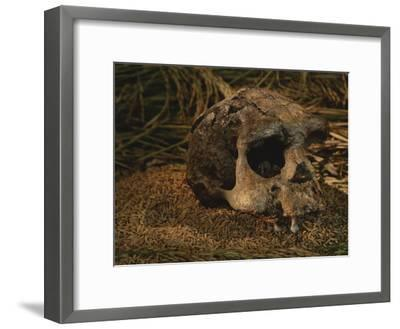 Close View of the Fossilized Skull of a Homo Erectus Found in Java-Kenneth Garrett-Framed Photographic Print