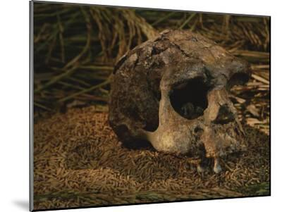 Close View of the Fossilized Skull of a Homo Erectus Found in Java-Kenneth Garrett-Mounted Photographic Print