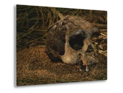Close View of the Fossilized Skull of a Homo Erectus Found in Java-Kenneth Garrett-Metal Print