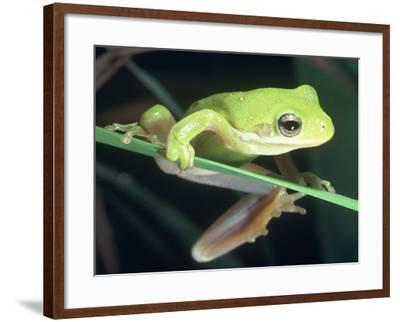 Frog Climbing on to a Leaf, Louisiana-Kevin Leigh-Framed Photographic Print