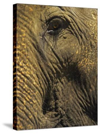 Close-up of Elephant, Thailand-Yvette Cardozo-Stretched Canvas Print