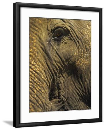 Close-up of Elephant, Thailand-Yvette Cardozo-Framed Photographic Print