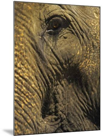 Close-up of Elephant, Thailand-Yvette Cardozo-Mounted Photographic Print