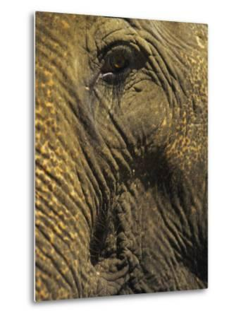 Close-up of Elephant, Thailand-Yvette Cardozo-Metal Print