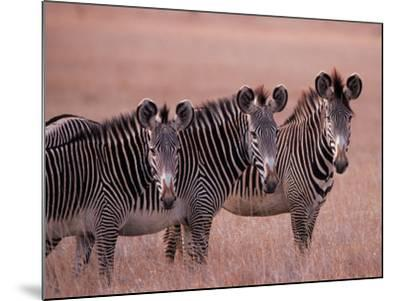 Grevy's Zebra, Masai Mara, Kenya-Dee Ann Pederson-Mounted Photographic Print