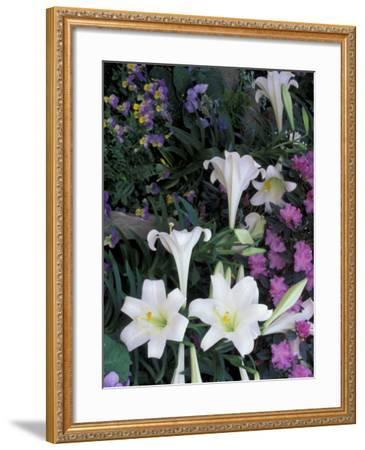 Hydrangea, Violas, Easter Lily's, Cincinatti, Ohio, USA-Adam Jones-Framed Photographic Print