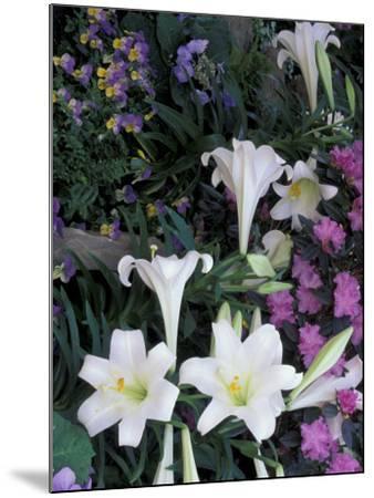 Hydrangea, Violas, Easter Lily's, Cincinatti, Ohio, USA-Adam Jones-Mounted Photographic Print