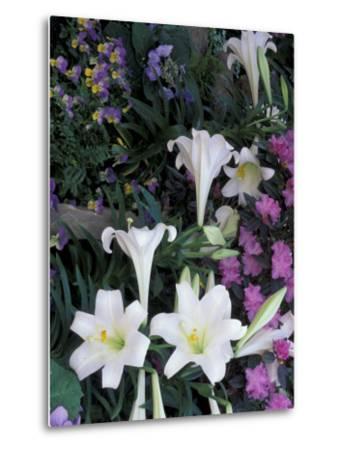 Hydrangea, Violas, Easter Lily's, Cincinatti, Ohio, USA-Adam Jones-Metal Print