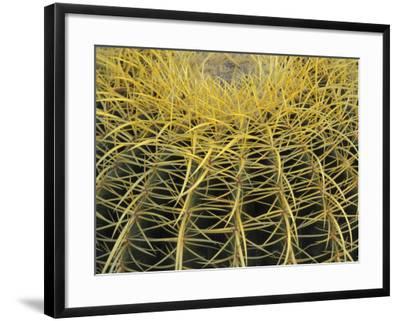 Golden Barrel Cactus, San Xavier, Arizona, USA-Jamie & Judy Wild-Framed Photographic Print