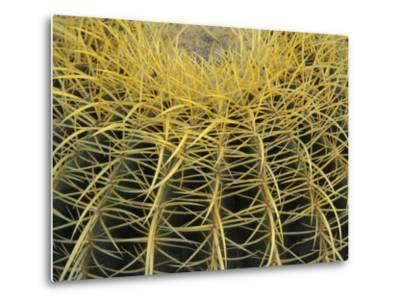 Golden Barrel Cactus, San Xavier, Arizona, USA-Jamie & Judy Wild-Metal Print