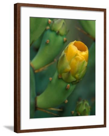 Prickly Pear Cactus Buds, Jekyll Island, Georgia, USA-Joanne Wells-Framed Photographic Print