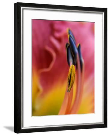 Daylily, Savannah, Georgia, USA-Joanne Wells-Framed Photographic Print