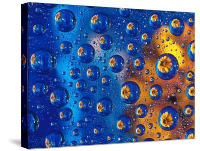 Dew Drops reflecting an Orange Profusion Zinnia with a blue backdrop, Sammamish Washington-Darrell Gulin-Stretched Canvas Print