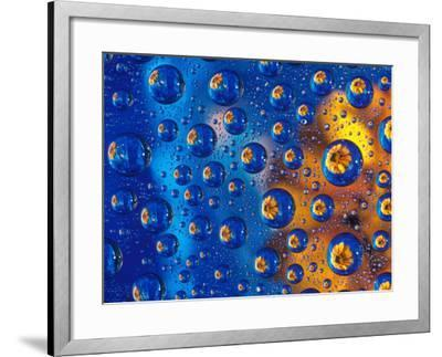 Dew Drops reflecting an Orange Profusion Zinnia with a blue backdrop, Sammamish Washington-Darrell Gulin-Framed Photographic Print