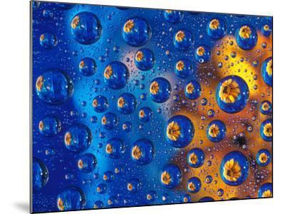 Dew Drops reflecting an Orange Profusion Zinnia with a blue backdrop, Sammamish Washington-Darrell Gulin-Mounted Photographic Print