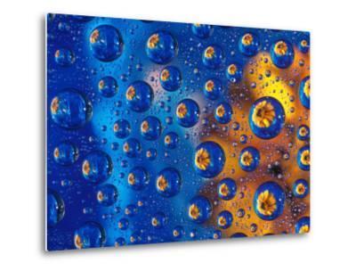 Dew Drops reflecting an Orange Profusion Zinnia with a blue backdrop, Sammamish Washington-Darrell Gulin-Metal Print