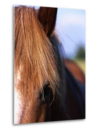 Portrait of Horse, Near Kragelund, Denmark-Holger Leue-Metal Print