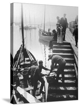 The Day's Catch is Unloaded from a Fishing Boat at Staithes Yorkshire-Graystone Bird-Stretched Canvas Print