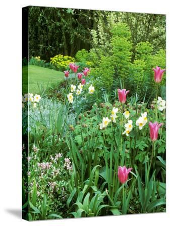 """Spring Border with Tulipa """"China Pink""""-Zara Mccalmont (napier)-Stretched Canvas Print"""