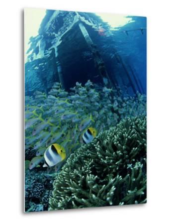 Reef Panorama Under Pier, French Polynesia-Tobias Bernhard-Metal Print