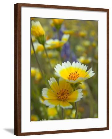 Tiddy Tips and Lupine, Shell Creek, California, USA-Terry Eggers-Framed Photographic Print