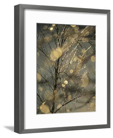 The Frozen Branches of a Small Birch Tree Sparkle in the Sunlight, Waynesboro, Pennsylvania-Raymond Gehman-Framed Photographic Print