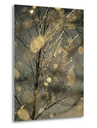 The Frozen Branches of a Small Birch Tree Sparkle in the Sunlight, Waynesboro, Pennsylvania-Raymond Gehman-Metal Print