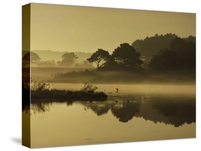Mallard Duck Lands in a Marsh at Dawn in Chincoteague National Wildlife Refuge, Virginia-James P^ Blair-Stretched Canvas Print
