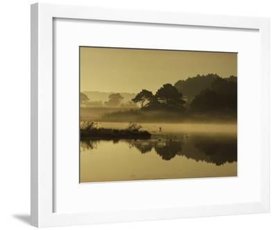 Mallard Duck Lands in a Marsh at Dawn in Chincoteague National Wildlife Refuge, Virginia-James P^ Blair-Framed Photographic Print