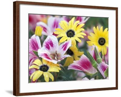 Daisy Flower Design, Portland, Oregon, USA-Darrell Gulin-Framed Photographic Print
