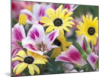 Daisy Flower Design, Portland, Oregon, USA-Darrell Gulin-Mounted Photographic Print