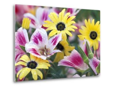 Daisy Flower Design, Portland, Oregon, USA-Darrell Gulin-Metal Print