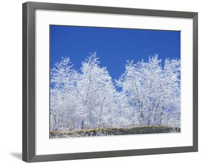 Snow-Covered Trees and Sky, Great Smoky Mountains National Park, Tennessee, USA-Adam Jones-Framed Photographic Print