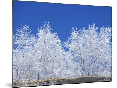 Snow-Covered Trees and Sky, Great Smoky Mountains National Park, Tennessee, USA-Adam Jones-Mounted Photographic Print
