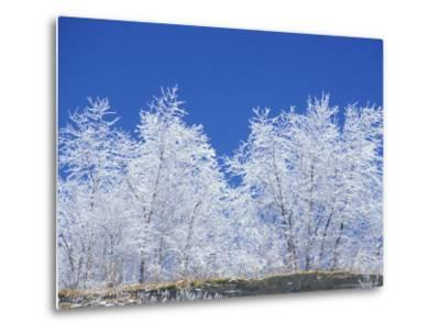 Snow-Covered Trees and Sky, Great Smoky Mountains National Park, Tennessee, USA-Adam Jones-Metal Print