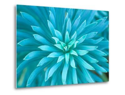 Euphorbia, Roche Harbor, Washington, USA-Rob Tilley-Metal Print