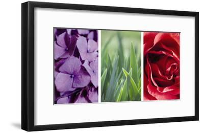 Floral Triptych--Framed Photo