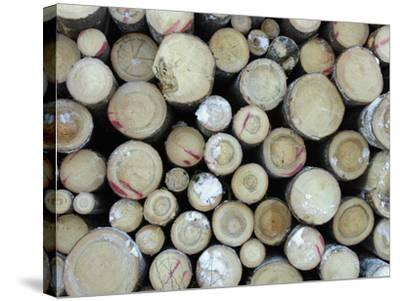 A Large Pile of Frozen Cut Logs with Snow--Stretched Canvas Print