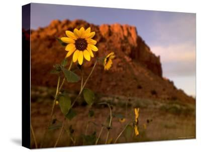 Desert Landscape with Rock Formation and Black-Eyed Susans-Raul Touzon-Stretched Canvas Print