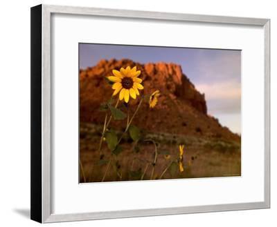 Desert Landscape with Rock Formation and Black-Eyed Susans-Raul Touzon-Framed Photographic Print