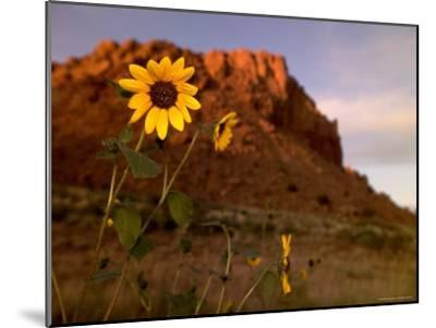 Desert Landscape with Rock Formation and Black-Eyed Susans-Raul Touzon-Mounted Photographic Print