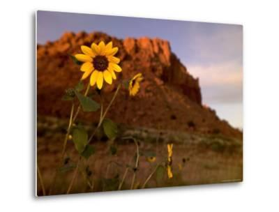 Desert Landscape with Rock Formation and Black-Eyed Susans-Raul Touzon-Metal Print
